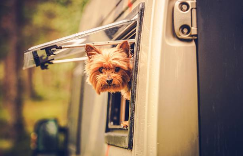 Remote temperature monitoring in RVs with Pets